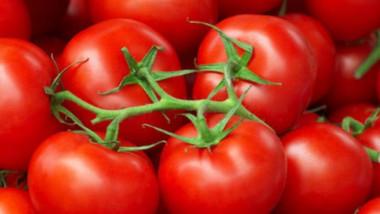 منع استيراد محصول الطماطم في البصرة وميسان لوفرة الإنتاج المحلي
