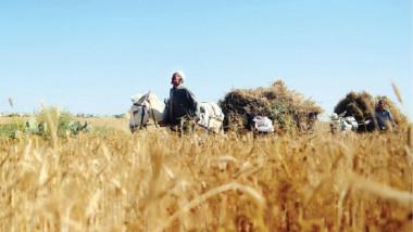 التجارة تحرص على تحقيق الأمن الغذائي للمواطنين بالسياقات الصحيحة