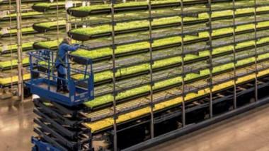 77 ترليون دولار إسهامات قطاع الأغذية في الاقتصاد العالمي