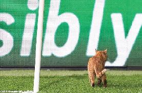 قطة تورط بشكتاش في أزمة مع اليويفا