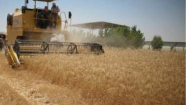 توزيع مستحقات مسوقي الحنطة المحلية لعام 2018