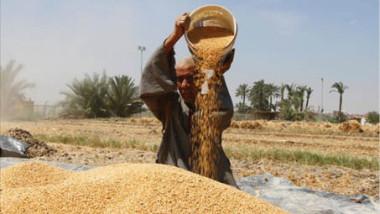 دعوة الشركات الأسترالية لتوريد الحنطة وتنفيذ المشاريع الاستثمارية