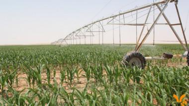 زراعة النجف: 20 ألف دونم المساحة المقررة للخطة الزراعية