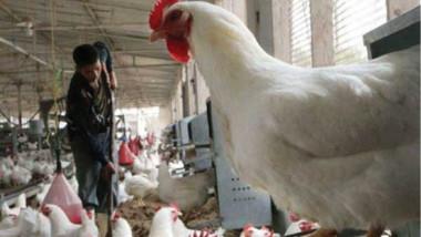 ورشة عمل للسيطرة على مرض أنفلونزا الطيور