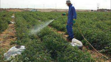 إجراءات جديدة لتقليل الضررعلى خطة زراعة المحاصيل الصيفية