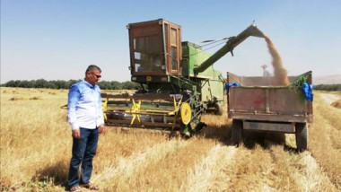 تراجع إنتاج الحنطة والشعير في محافظة نينوى
