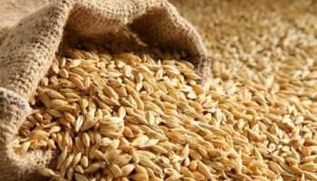 وصول كميات من الحبوب المستوردة لسايلو الرمادي