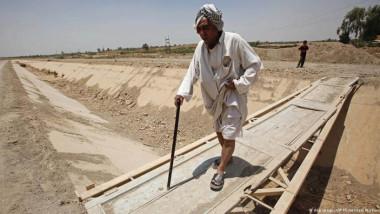 50 % نسبة تضرر القطّاع الزراعي العراقي بسبب الجفاف