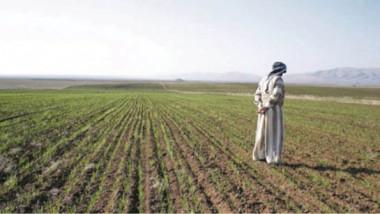 التخطيط: انخفاض المساحة المزروعة والإنتاج لشح الموارد المائية