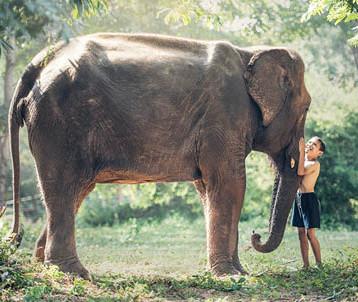 الفيل أكثر الحيوانات إثارة لتعاطف البشر