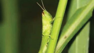 تغير المناخ يجعل الحشرات تأكل كميات أكبر من المحاصيل