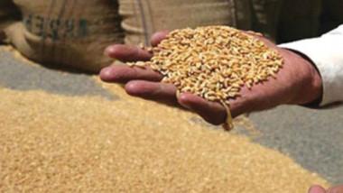 استمرار عملية تسلّم وتفريغ الحنطة المحلية والمستوردة وتجهيز المطاحن بالخلطات المعتمدة
