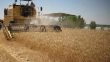 التجارة تواصل تسلم وتجهيز كميات الحنطة والرز المستورد