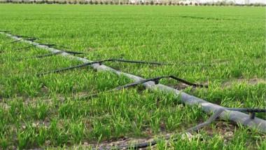 خطة الزراعة للموسم الشتوي الحالي أقل من مثيله الماضي بنسبة 55 %