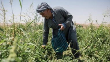 في بغداد.. «فاو» تحتفل بيوم الأغذية العالمي