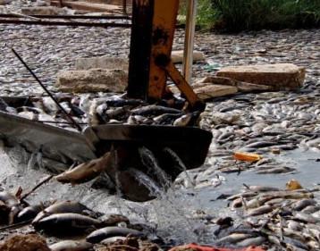 تحقيق دولي يكشف سبب نفوق أسماك العراق