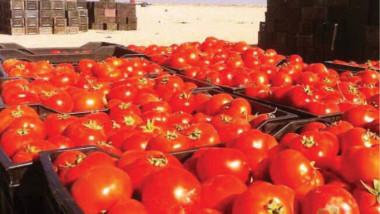 وزير الزراعة: انتاج الطماطة بخير وسنقضي على مصادر الإشاعات