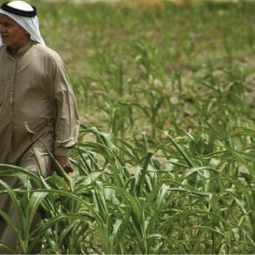 وزير الزراعة يبحث مع قطر الاستثمار في قطاع الزراعة بشقيه النباتي والحيواني