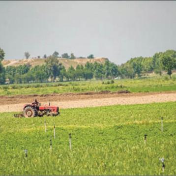 """مديرية زراعة نينوى تبحث أثر التغير المناخي في الزراعة الديمية وتتوقع ظهور حشرة """"المن"""""""