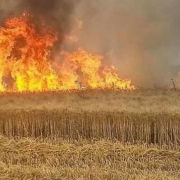الزراعة النيابية: على الحكومة القيام بواجباتها لمنع استهداف اقتصاد البلاد