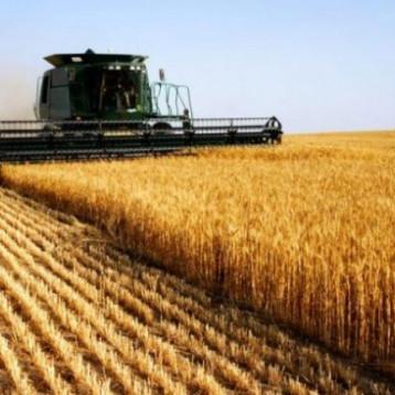 وزير التجارة يوجه باتخاذ اجراءات عاجلة لحماية الخزين الاستراتيجي من الحنطة