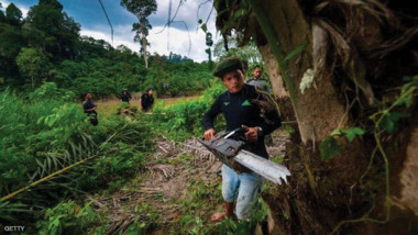 الأكويلاريا.. تنتج العطر لتدرء عنها العفن