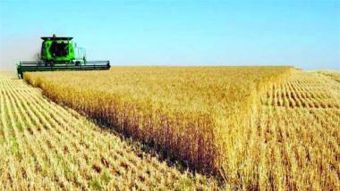 الزراعة: «الحرائق» لم تعق ارتفاع انتاج المحاصيل الستراتيجية