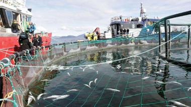 دراسة تظهر أول دليل على وجود تعلق عاطفي بالشريك لدى نوع من الحيوانات البحرية