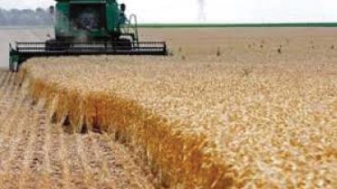 التجارة تستعد لتسويق 4 ملايين طن من الحنطة