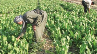 انخفاض اسعار المحاصيل الزراعية يدفع بالمزارعين الى رمي محاصيلهم على قارعة الطريق