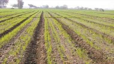 كربلاء: خطة لزراعة 133 ألف دونم بالمحاصيل والخضروات الشتوية