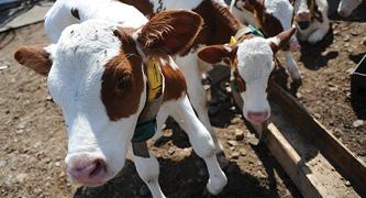 تجربة لزراعة لحوم البقر في الفضاء