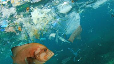 غول المحيطات يقتل البشر ببطء