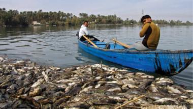 مرض وبائي يصيب الأسماك في محافظات البلاد