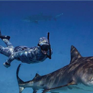 القرش اقتحم القفص والغواصون نجوا بآخر لحظة