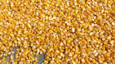 الزراعة تصرف المستحقات المالية لمسوقي محصول الذرة الصفراء ببغداد والمحافظات
