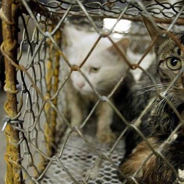 """كورونا و""""أسواق الحيوانات"""".. والأمم المتحدة تدخل على الخط"""