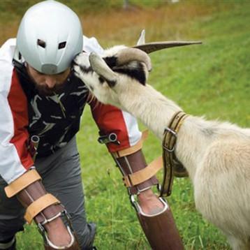الماعز تفهم لغة البشر