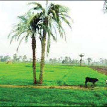 العراق ومصر يبحثان اعتماد الطرق العلمية في القطاع الزراعي