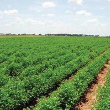 نحو تأهيل المشاريع الزراعية وتشغيل الايدي العاملة في العراق