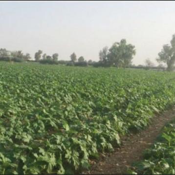 وزير الزراعة يوجه بتجهيز الدوائر البلدية بالشتلات والأشجار لزيادة المساحات الخضر