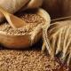 حساسية القمح وعلاقتها بالداء البطني
