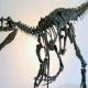 علماء يكتشفون «بقايا ديناصور» في المغرب